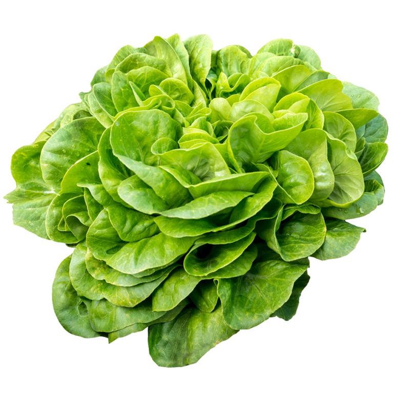 Salatkopf der Marke Diar Roll